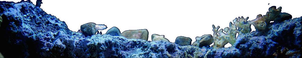 Coral background - Bottom